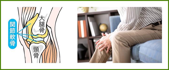 軟骨と健康
